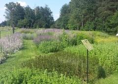 Najpiękniejszy ogród w gminie Węgierska Górka