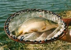 Technik rybactwa śródlądowego