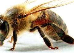 """Seminarium pszczelarskie """" Sanitacja, bioasekuracja, profilaktyka rodzin pszczelich oraz optymalizacja prac w kwietniu"""