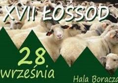 ŁOSSOD w Żabnicy-jesienny spęd owiec z hal