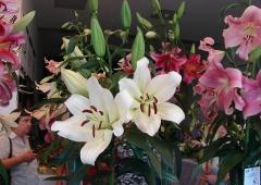 XXV Międzynarodowa Wystawa Lilii  i Kompozycji Kwiatowych w Rybniku
