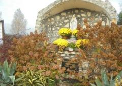 Chryzantemy i pomoc dla rolników