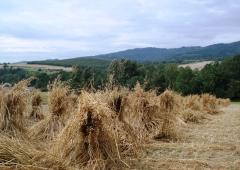 Zapraszamy na kurs podstawowy stosowania środków ochrony roślin.