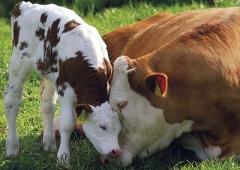 Ustawa o ochronie zwierząt - szkolenie w Rybniku
