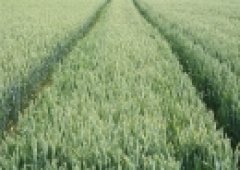 Integrowana ochrona roślin. Bioasekuracja w zapobieganiu ASF i ptasiej grypie.