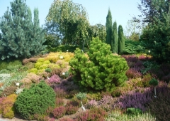 Kolory Jesieni w Ogrodach Kapiasa