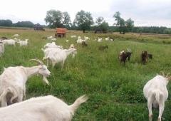 """Wyjazd szkoleniowy """"Innowacyjne rozwiązania w uprawach ekologicznych oraz produkcji zwierzęcej wdrażane w ekologicznych gospodarstwach demonstracyjnych"""" - relacja"""